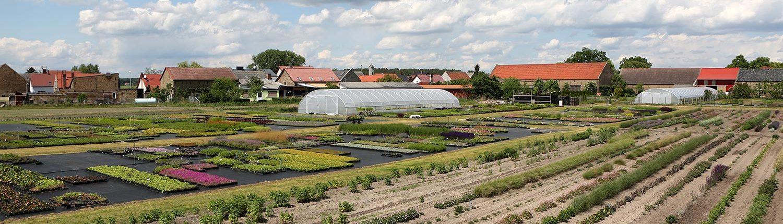 Mutterpflanzen und Containerquartier