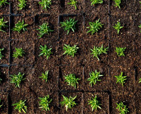 Bild - Ansicht auf frisch produzierte Mittagsblumen