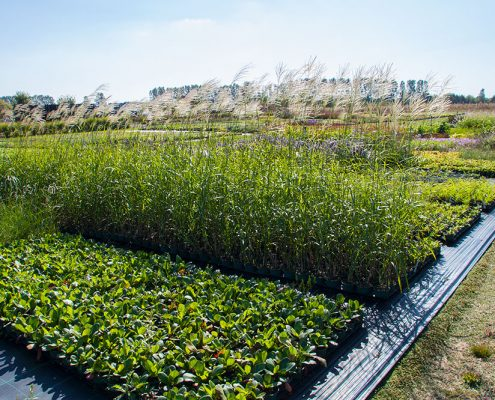 Bild Gärtnerei - Ansicht verschiedener Gräser, Stauden und Pflanzen